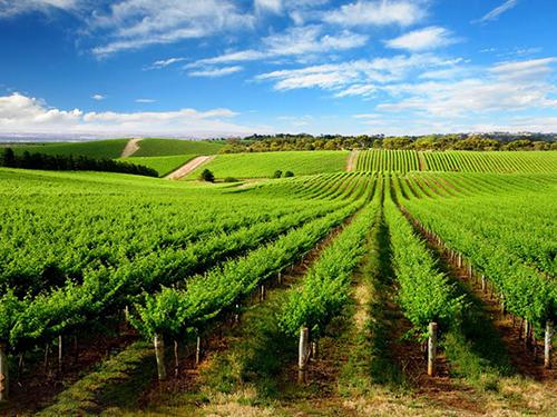 走进临朐沂山,看高科技农业,种菜居然不用土