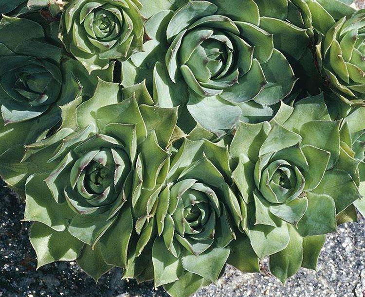 冬季水培植物的越冬技巧