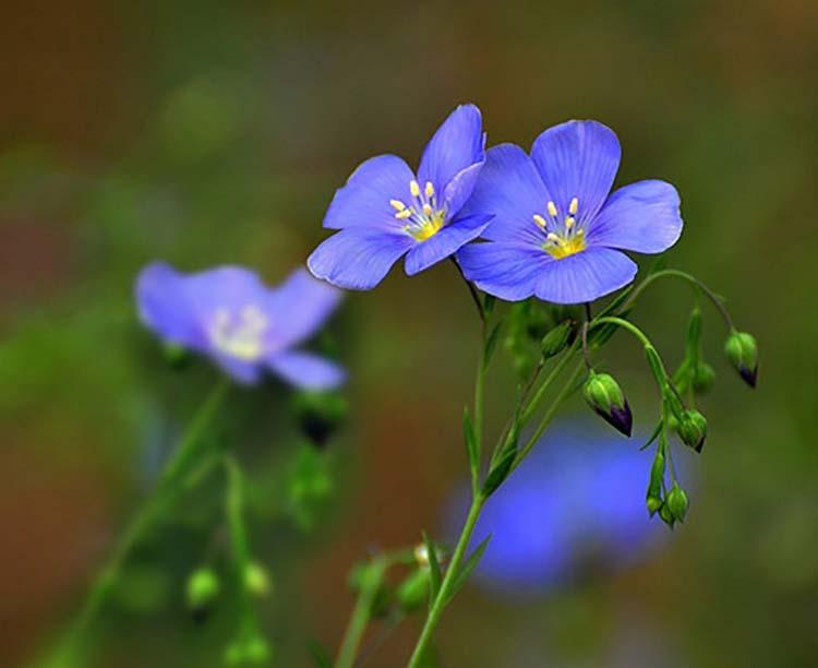 冬季花卉浇水方法