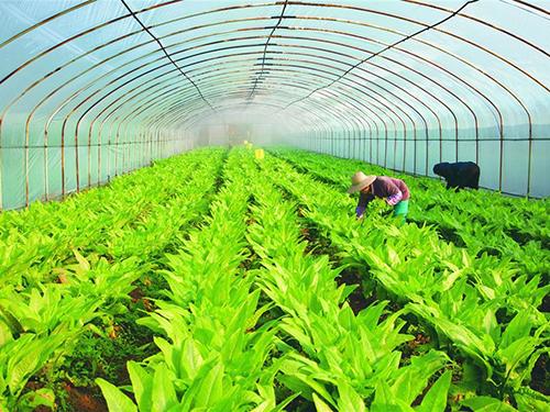 """我省认定首批省级农业对外合作""""两区"""""""