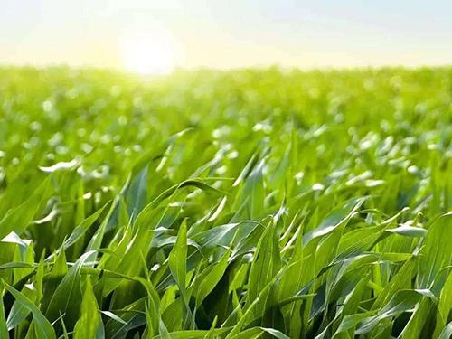 拥抱新时代新技术激活创新要素 聚焦新农业新发展推动乡村振兴