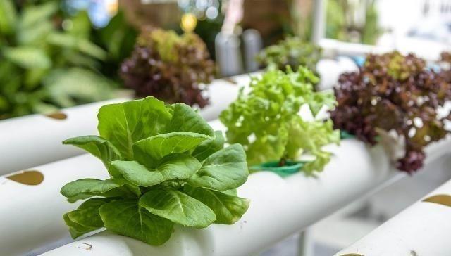 无土栽培新技术:未来的蔬菜,难道都是这么种植出来的?