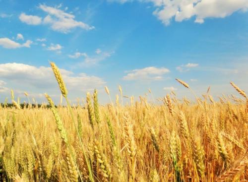 """农业市场边际趋势向好 美好农业如何把握""""刚需消费""""机遇"""