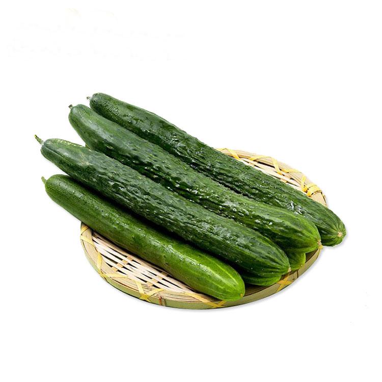 黄瓜 新鲜现摘苏北农家大棚短把密刺五斤包邮