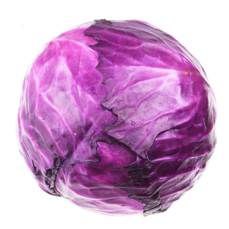 紫甘蓝 紫色卷心菜 紫包菜庭院阳台蔬菜 易种高产