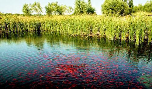 夏季鱼塘水质的管理措施