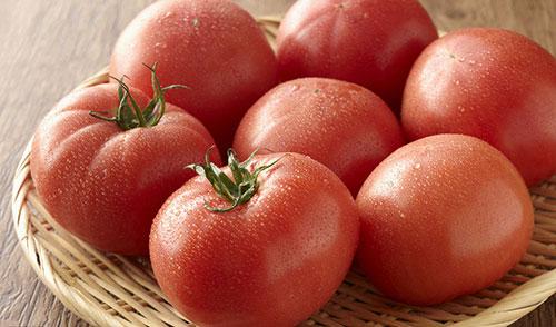 西红柿栽培管理技术要点