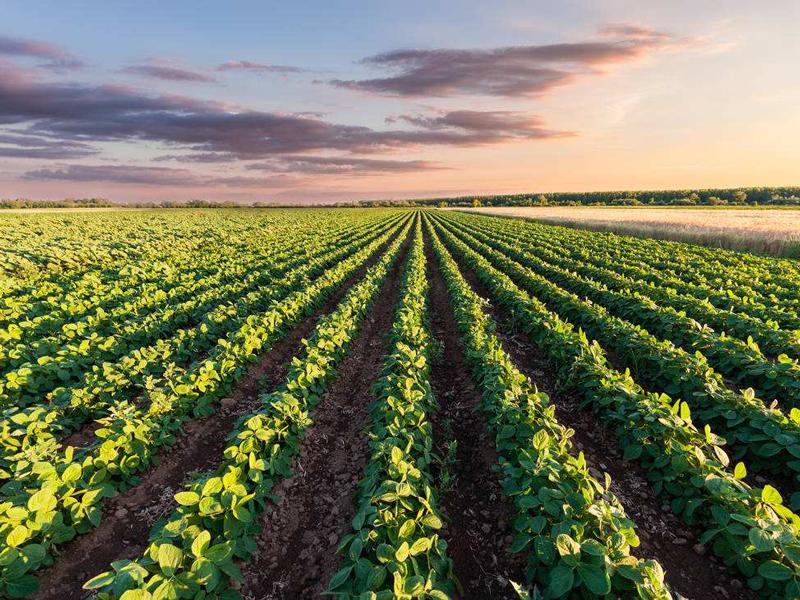 临沧双江绿色发展推动农业产业提质增效