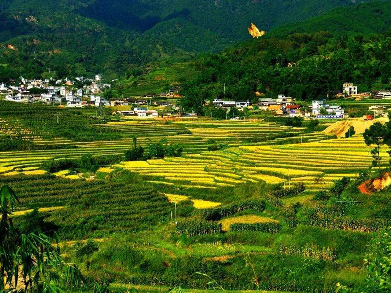 改革开放40年临沧市农业发展综述:青山沃野绘新景