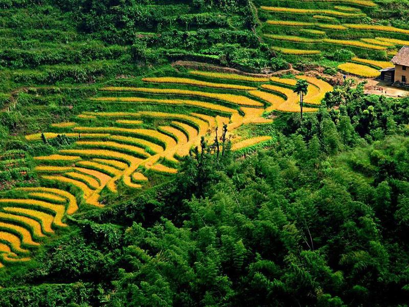 臨滄不斷推動農業發展高質量