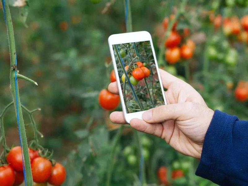 临沧:打造现代农业样板闯出产业发展加速度