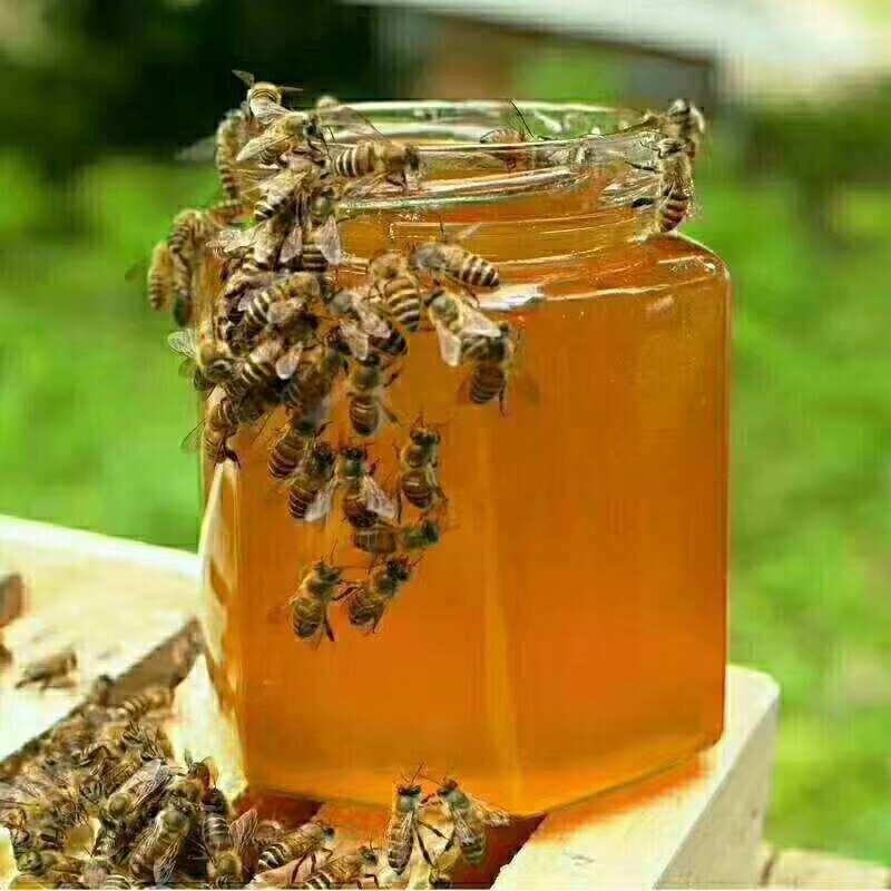 泸沽湖紫云英蜂蜜