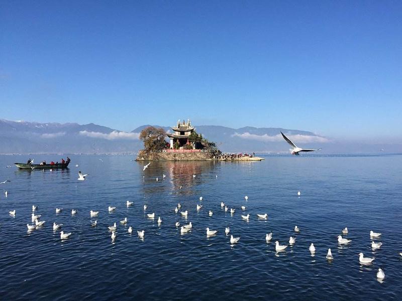 大理风光在苍洱,洱海这么玩风景如画还免费!