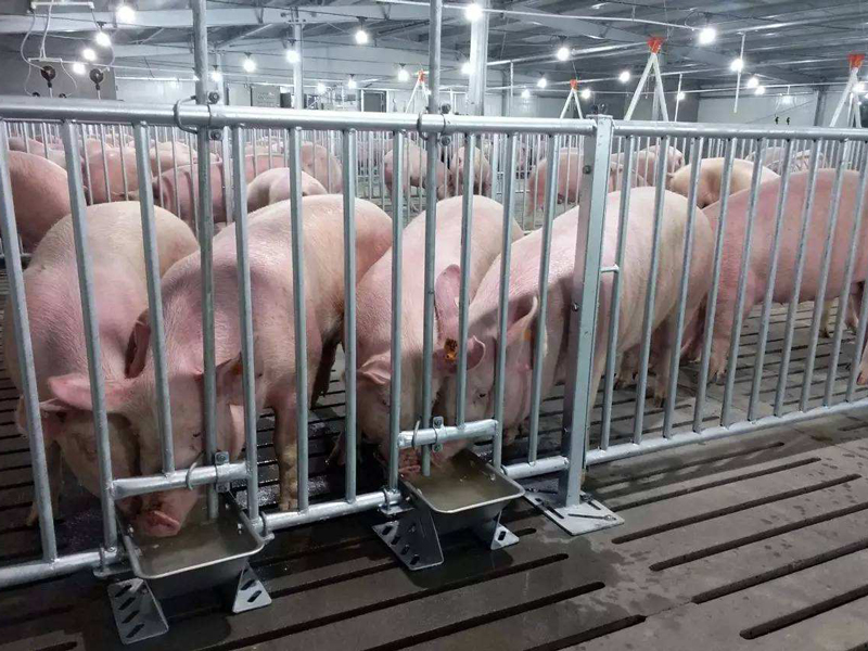 规模化猪场无公害生产的关键技术