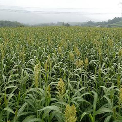 云南:数字农业推动高原特色农业再跨越