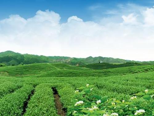 全国各类农业产业化组织辐射带动1.27亿农户户年均增收超过3000元