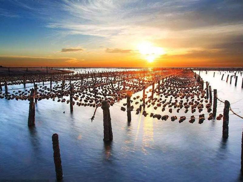 云南省農業廳調研組到德宏調研漁業發展情況