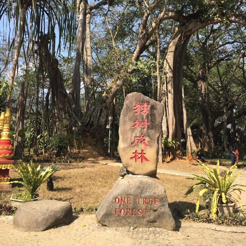 云南瑞麗莫里熱帶雨林景區+一寨兩國+芒令獨樹成林一日游