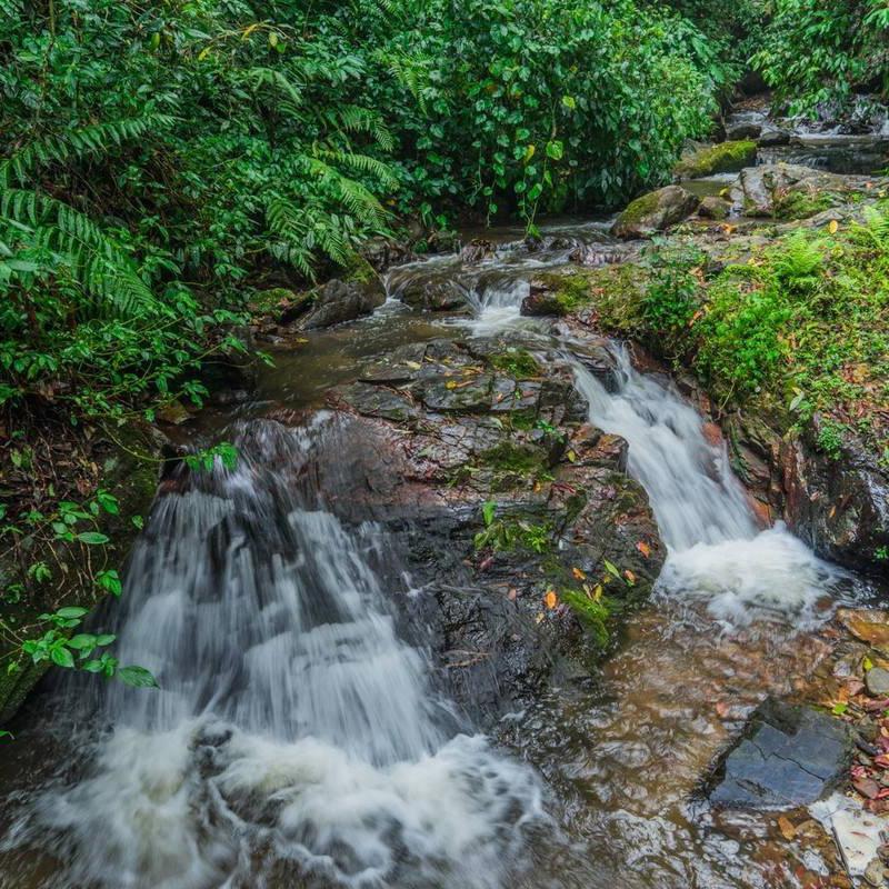 莫里熱帶雨林景區