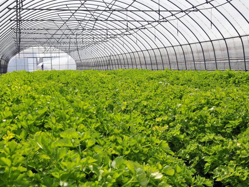 """云南高原特色农业绿意盎然——云南省全力打造世界一流""""绿色食品牌""""成效显著"""