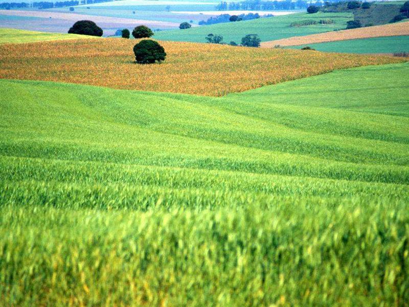 云南农业产业高质量发展体系正式发布