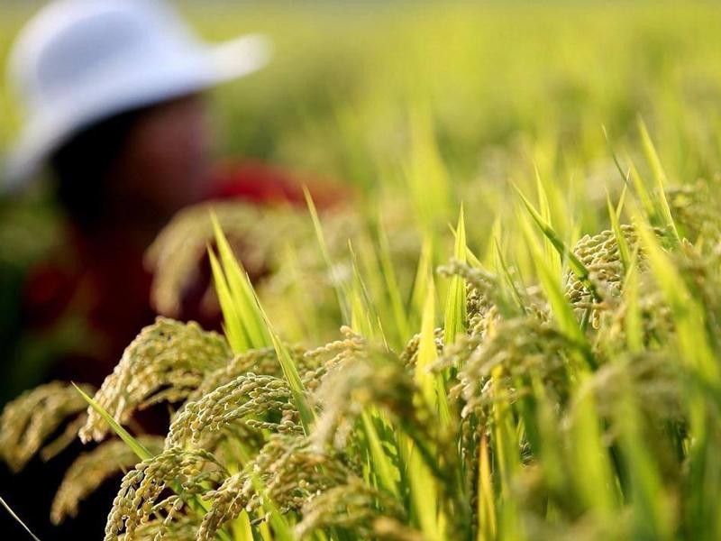 文山州实施农业产业扶贫助推乡村振兴