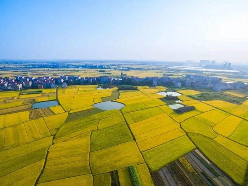 云南文山全面开展高标准农田建设 夯实农业发展基础
