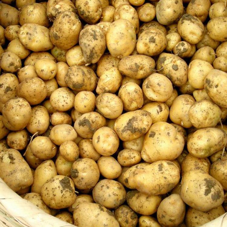 农家小土豆