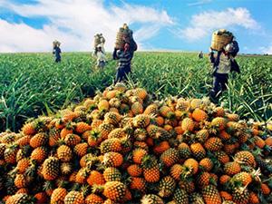 农业企业融资难 建议政府引导鼓励
