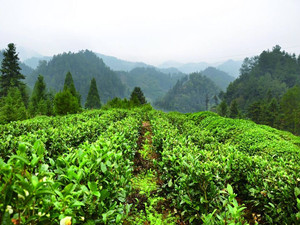 云南:扶持新型农业经营主体 发展特色农业