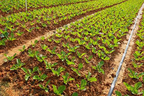 做农业社会化服务体系的先行者与实践者