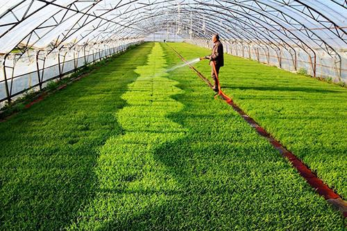 湖南启动绿色食品宣传月活动