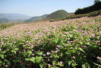 云南省迪庆州:农业科技进藏区 真心服务农牧民