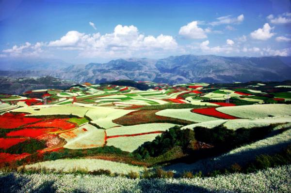 """云南高原特色农产品来沪推介 在家门口品味""""彩云之南""""之美"""