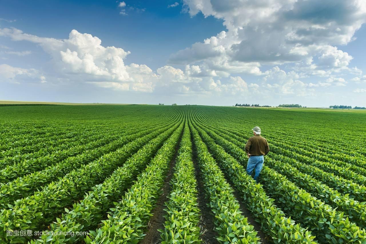 2019年的农业重点补贴项目,再不看就晚了!