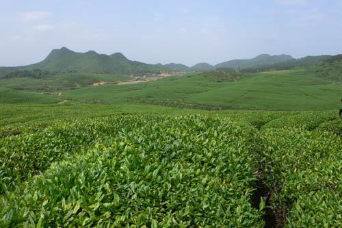 建宁:积极探索生态旅游和特色农业结合的乡村振兴之路