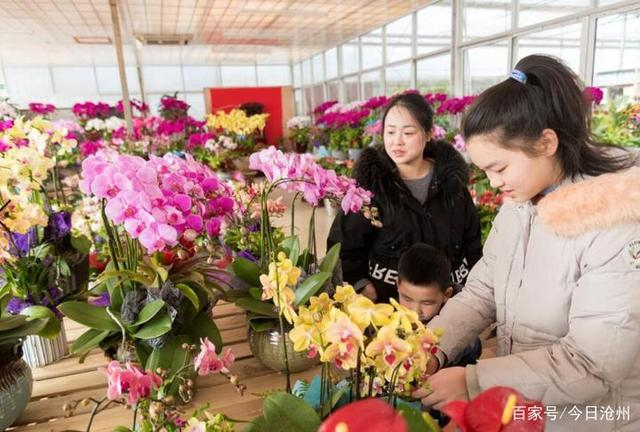 """新春到,鲜花俏,传统花卉不减""""姿色"""",小型盆栽格外""""撩人"""""""
