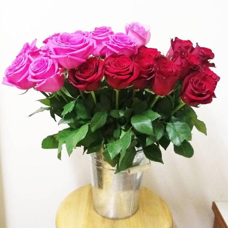 A级出口玫瑰花