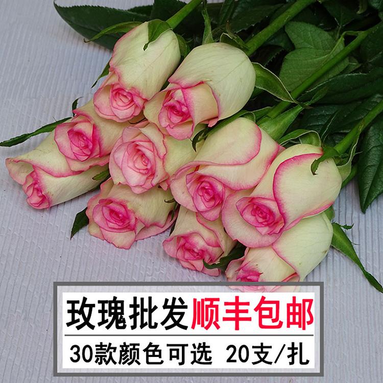红白粉玫瑰花鲜花批发