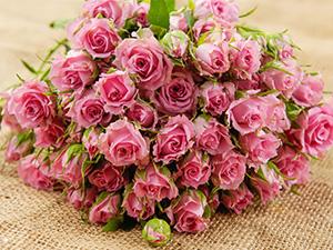 混搭玫瑰花束绣球北京同城鲜花速递生日鲜花