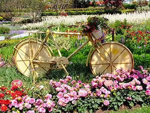 第八届农博会暨第十八届花博会下月开幕 参展花卉品种超1500个