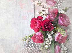 玫瑰花修剪方法及技术