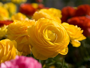 我市多项政策扶持花卉苗木产业发展