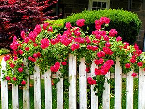 草花上门服务|草花|山一花卉苗木草花种植基地