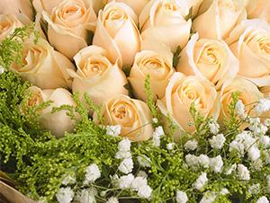 33朵香槟玫瑰花束同城送女友圣诞节生日送花鲜花速递