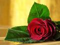 食药监总局:用硫磺熏蒸玫瑰花的行为属于违法行为