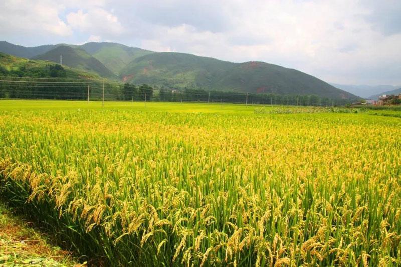 云南:壮大农业产业拓宽致富之路