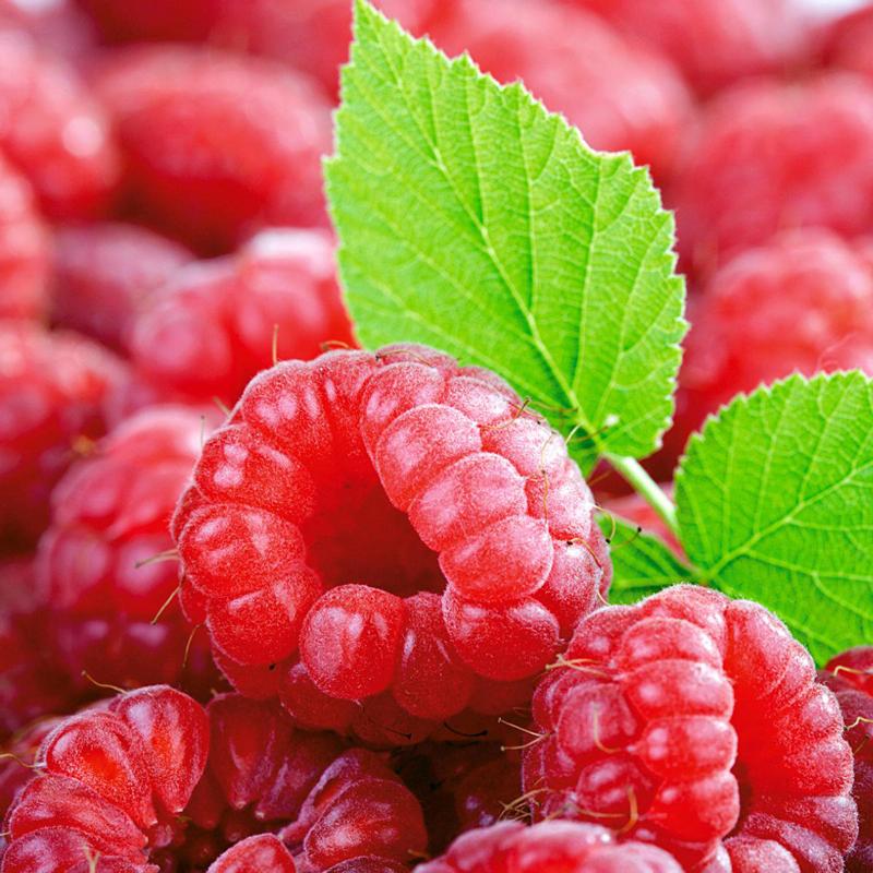 野生红树莓