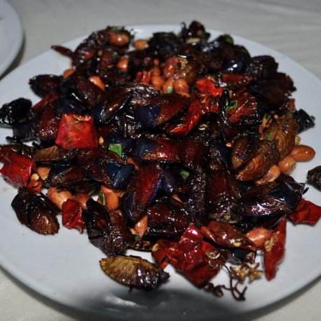 昭通绥江酒香虫