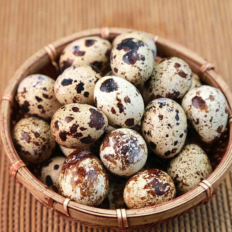 农家散养新鲜生鹌鹑蛋无添加健康绿色